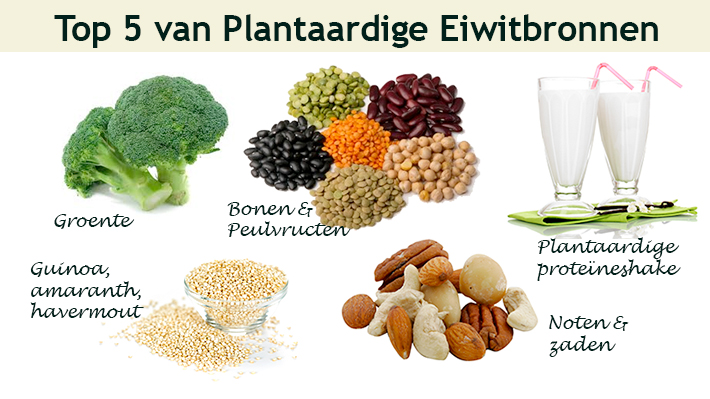 waarvoor dienen eiwitten